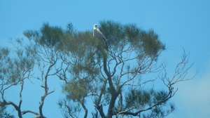 Caloundra Cruise Sea Eagle